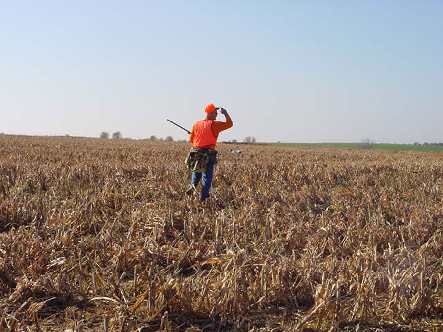 Pheasant hunts in kansas with kansas creek gamebirds for Kansas fishing regulations