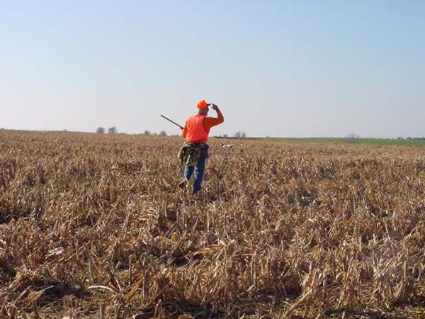 Page 2 2 pheasant hunts for Ks fishing license